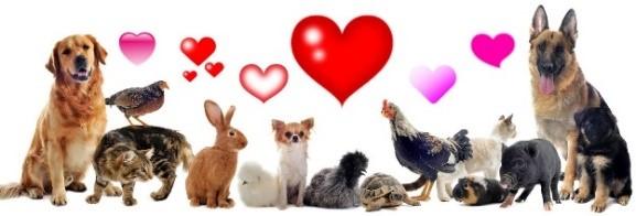 Pets Love.jpg