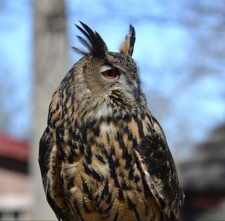 Zoo Owl Sideview.PNG