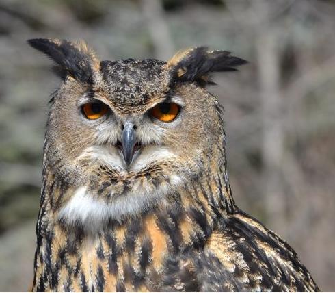 Zoo 's Owl 1.PNG