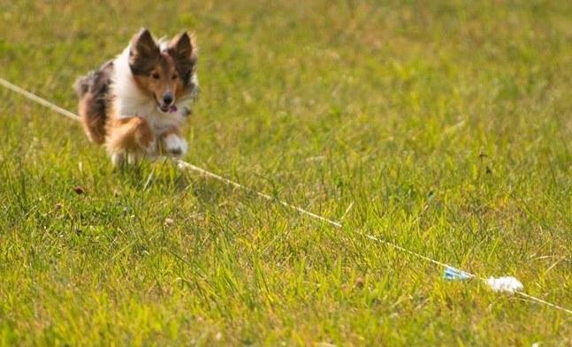 Dog Scout 1.jpg