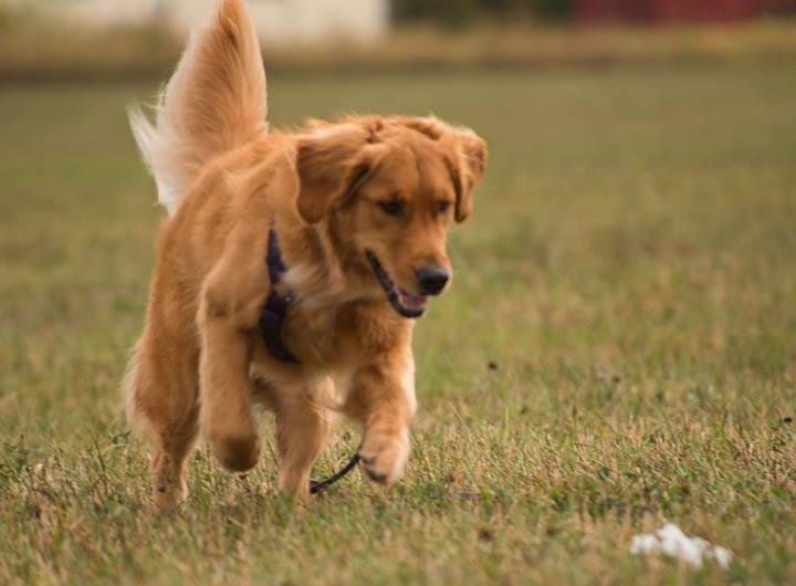 Dog Scout 2.jpg