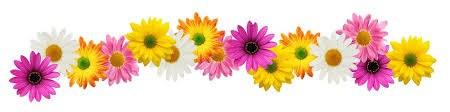 flower border 3.jpg