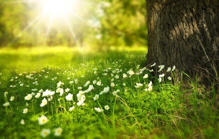 Spring lapsit picture.jpg